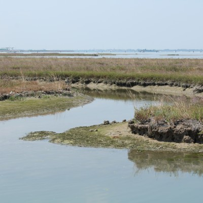 Design of interventions for the naturalistic, environmental and territorial re-qualification of the Venice lagoon